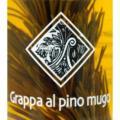 latschenkiefer-grappa-al-pino-mugo-da-50-cl